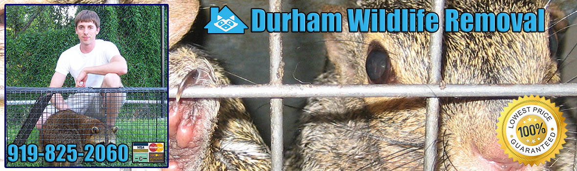 Durham Wildlife and Animal Removal